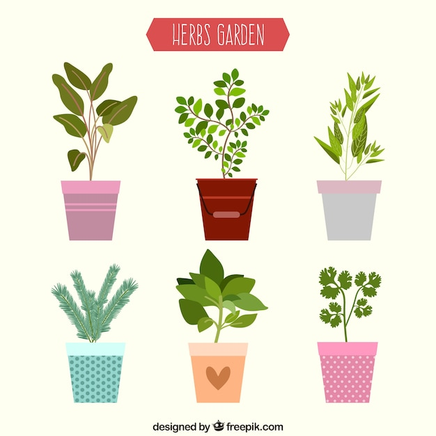 Flat herbs garden collection Free Vector