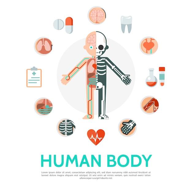 Flat human body anatomy round concept Free Vector