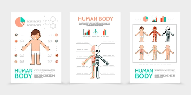Flat human body posters Free Vector