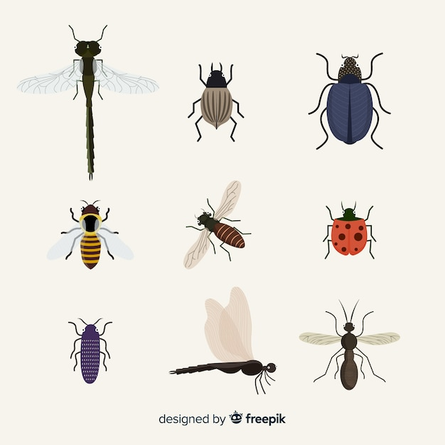 Flat insect pack Free Vector