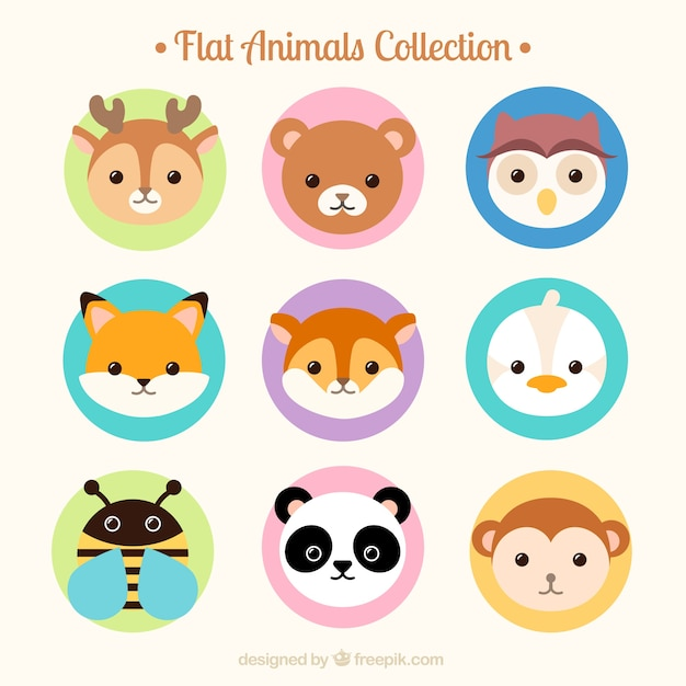 Avatar 2 Animals: Flat Lovely Animal Avatar Collection Vector