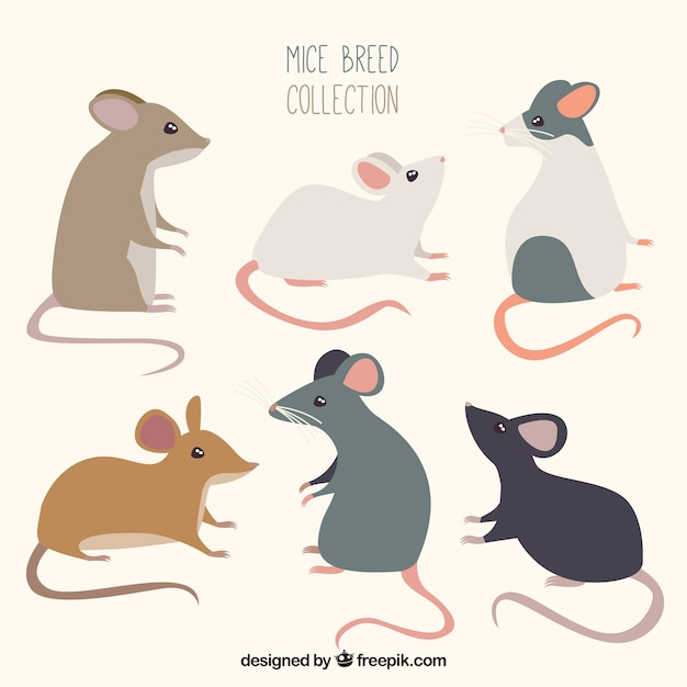 Flat mice pack of six Free Vector