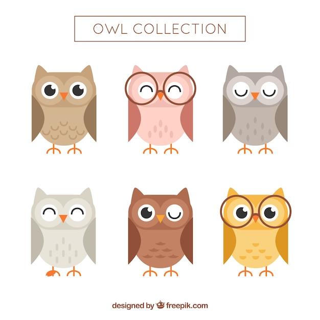 Flat owl set Free Vector