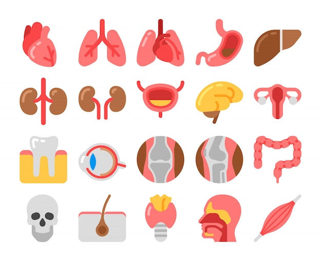 Flat style medical icons with human organs Premium Vector