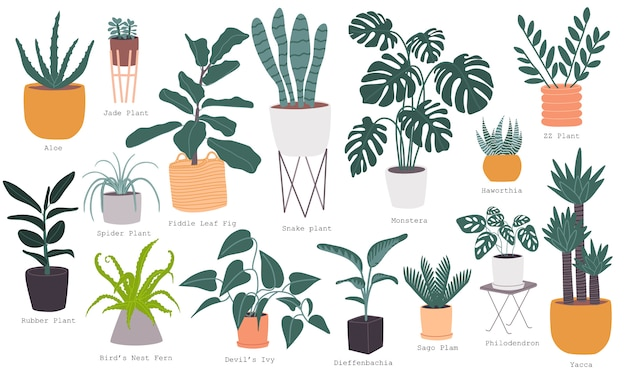 Flat style vector illustration set of most popular indoor house plant collection with name. Premium Vector