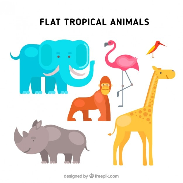 Flat tropical animals Free Vector
