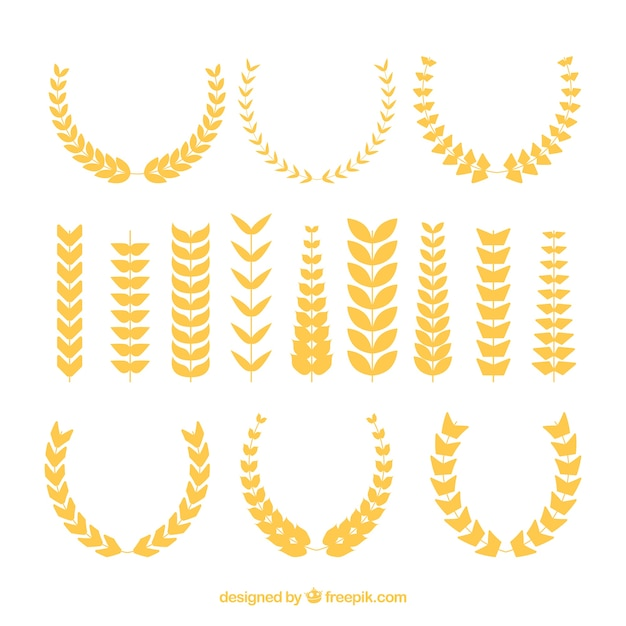 Flat wheat collection Free Vector