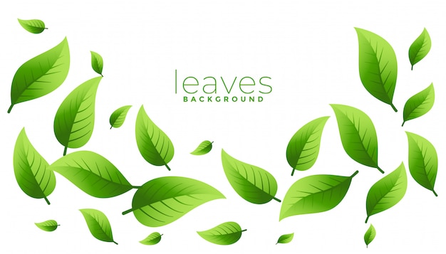Floating or falling green leaves background design with copyspace Free Vector