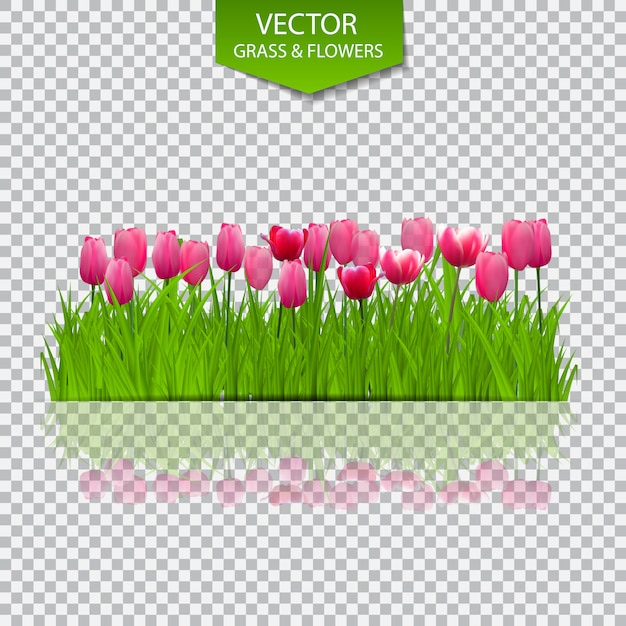 Floral background with tulips on transparent background.  illustration. Premium Vector
