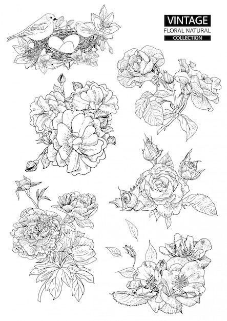 Floral outline coloring vintage collections Premium Vector