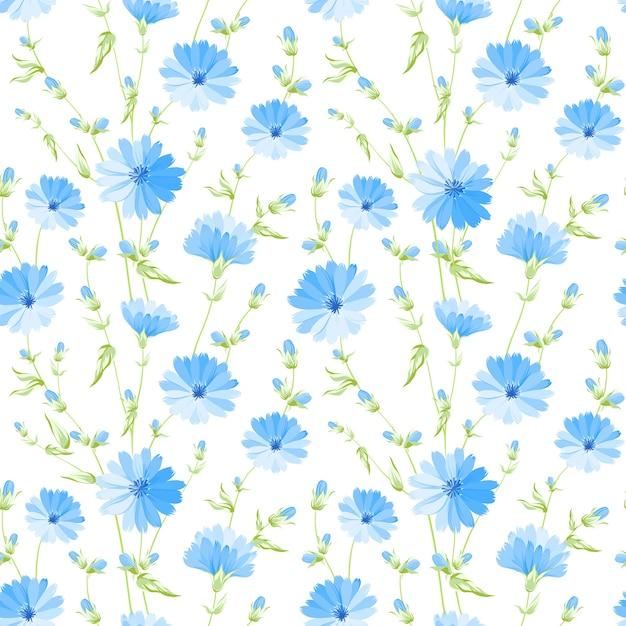 Motivo floreale senza soluzione di continuità. cicoria in fiore su sfondo bianco. Vettore gratuito