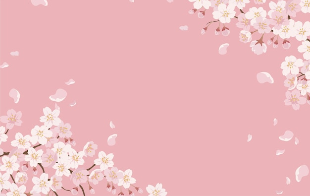 Floral with cherry blossoms in full bloom on a pink. Free Vector