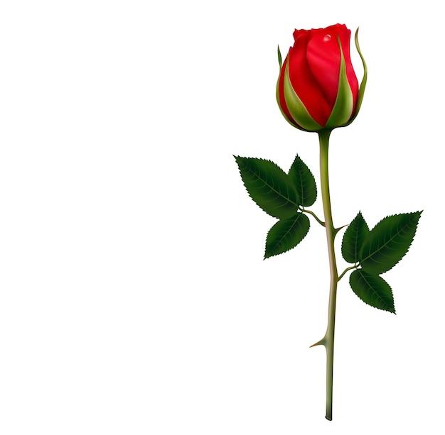 아름 다운 붉은 장미와 꽃 배경입니다. 프리미엄 벡터