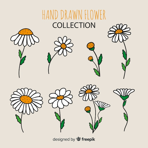 Flower collection Free Vector