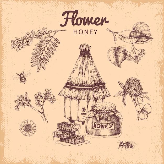 Composizione disegnata a mano del miele del fiore Vettore gratuito