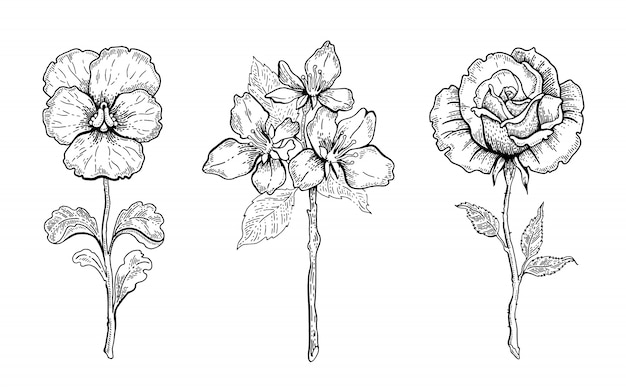 Flower set. pansy, cherry blossom, rose.  floral graphic, sketch plant illustration. black and white vintage line art. spring or summer hand drawn flowers. Premium Vector