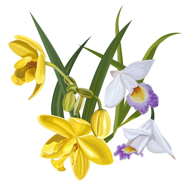 黄色と白の蘭の花のベクトル図 Premiumベクター