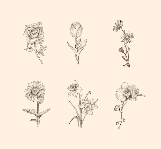 Flower vintage illustration with hand drawn style Premium Vector