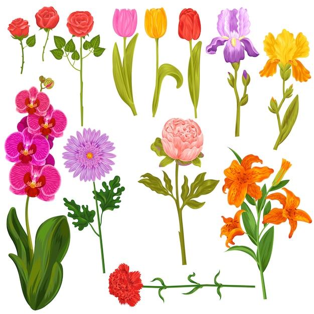 Цветы и цветочные векторных акварель цветами поздравительных открыток приглашение на свадьбу день рождения Premium векторы