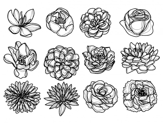 Flowers hand drawing and sketch black and white Premium Vector