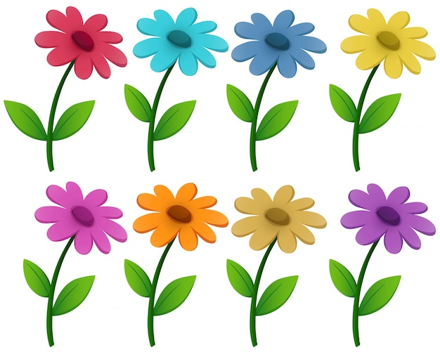 Flowers in eight different colors Vector | Free Download