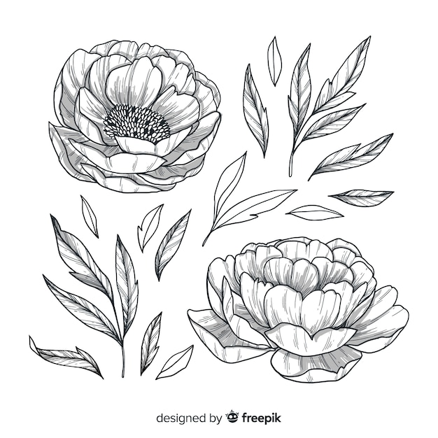 Flowers and leaves hand drawn style Free Vector