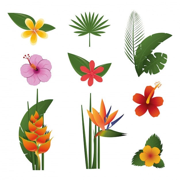 Flowers tropical exotics set Free Vector