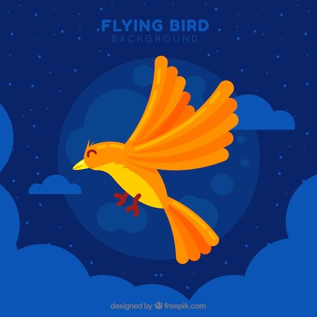 Flying bird at night background