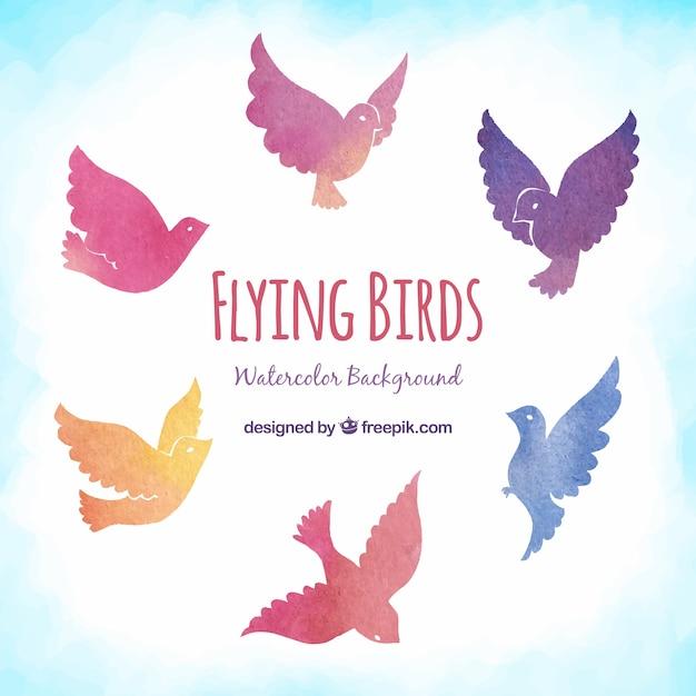 Flying birds background