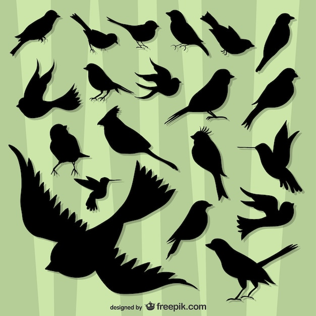 Flying birds silhouette pack