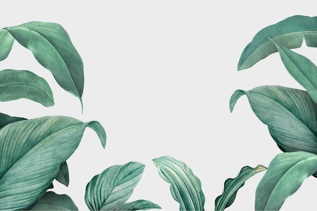 Фон листвы Бесплатные векторы