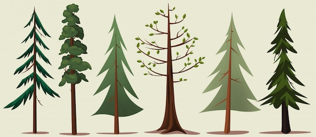 Forest trees variety Premium Vector