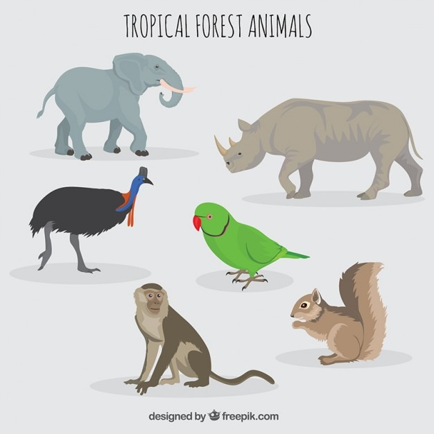 Forest and wild animals Free Vector