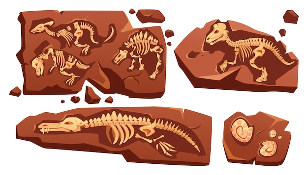 Fossil dinosaurs skeletons, buried snails shells, paleontology finds. cartoon illustration of stone sections with bones of prehistoric reptiles and ammonites isolated on white background Free Vector