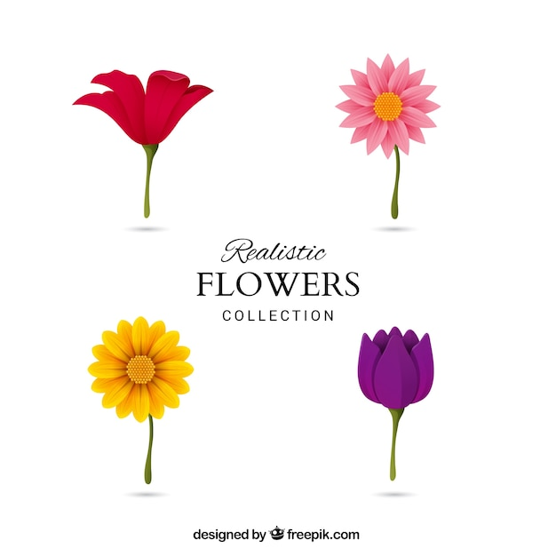 Four different flowers vector free download - Clase de flores y sus nombres ...