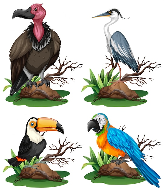 Four different kinds of wild birds illustration vector - Clases de pajaros ...