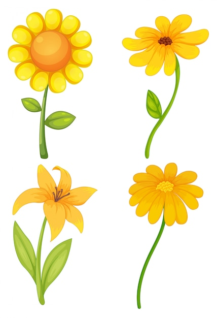 Diffe kinds of yellow flowers flowers healthy four diffe kinds of yellow flowers free vector four diffe kinds of yellow flowers vector free mightylinksfo