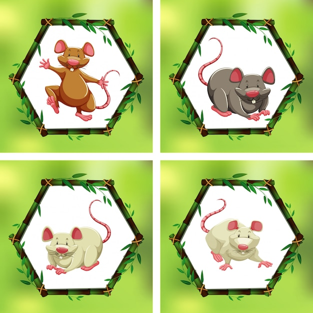 Four different rats in bamboo frames Free Vector