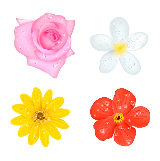 Four flowers with drops set Free Vector