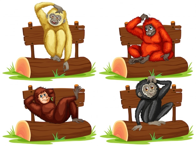 Four gibbons sitting by the sign illustration Free Vector