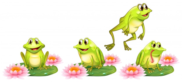 Four green frogs on water lily Free Vector