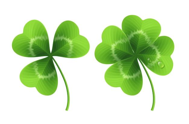 Four leaf clover isolated on white.  illustration Premium Vector