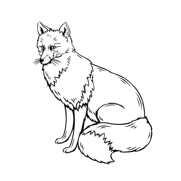 Фокс наброски иллюстрации. эскиз лесных животных для зоопарка Premium векторы