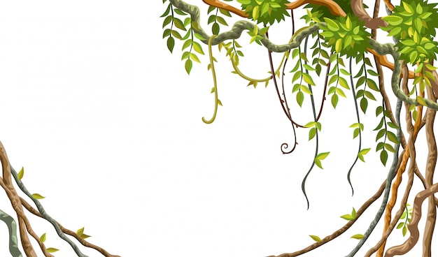 Frame liana branches and tropical leaves. Premium Vector