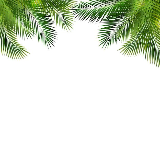 緑のヤシの葉を持つフレームホワイトバックグラウンド Premiumベクター