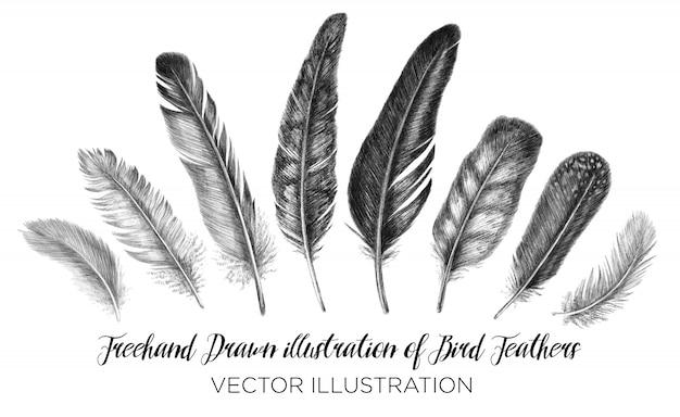 Перо для рисования от руки. племенная иллюстрация перьев. изолированные на белом фоне в графическом стиле. Premium векторы