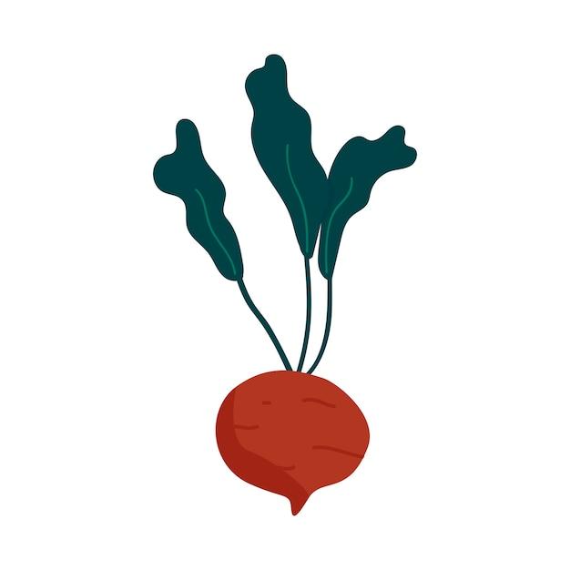 Fresh beet healthy ingredient vector Free Vector