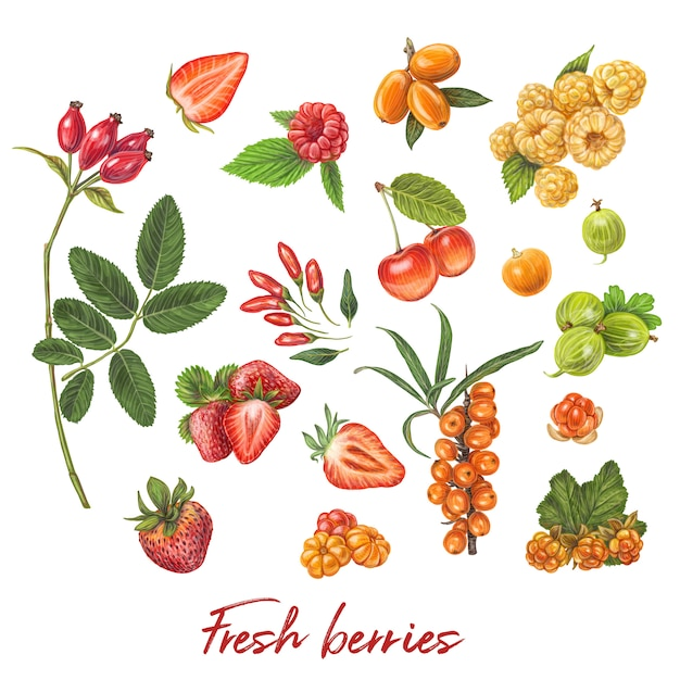 新鮮な果実手描きのベクトル図 Premiumベクター