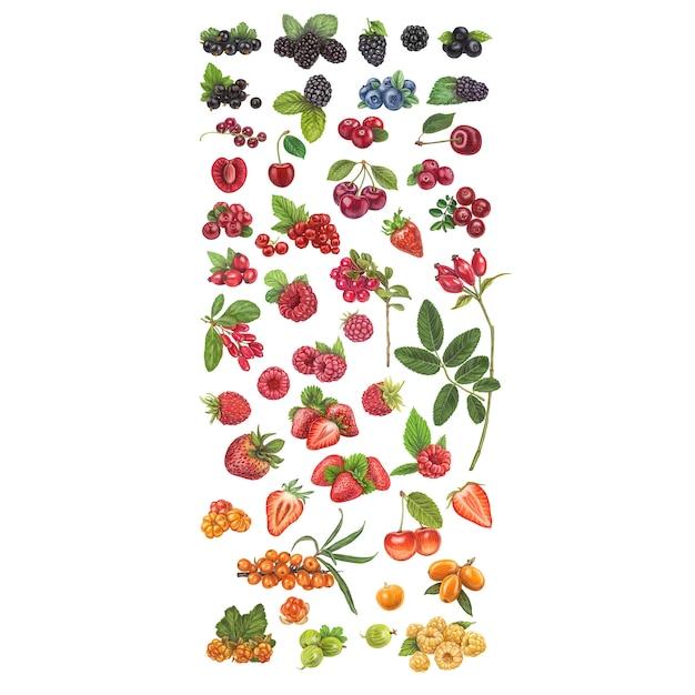 Fresh berries hand drawn vector illustration Premium Vector
