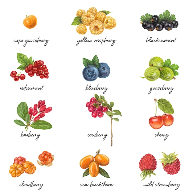 Fresh berries list with names Premium Vector
